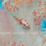 イナズマヒカリイシモチ 学名:Siphamia argentea